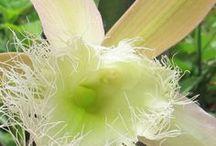 Orchids / Orchids in my garden Myrtle Glen, Central Florida