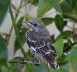 Birds in Myrtle Glen