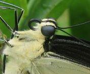Butterflies in Myrtle Glen