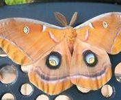 Moths in Myrtle Glen