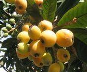 Edibles in Myrtle Glen / gardening in central Florida