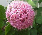 light to dark pink blooms