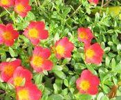orange, red color blooms