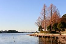 Lake Sanaru / Lake Sanaru, Hamamatsu-city, Japan.  佐鳴湖 浜松