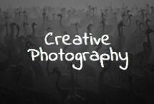 Creative Pet Photography