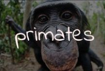 Primates / A board of pins that show our relatives. The beautiful primates of this planet.