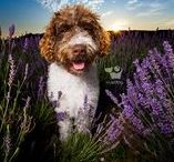 • My Dog Blogs • / Follow this board to see some examples of my client photo sessions.