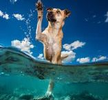 • My Inspiration • / Follow this board to see images from pet photographers around the world that inspire me.