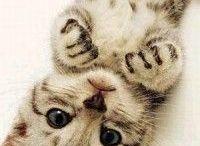 Cute animal pour charlotte