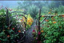Greenhouses/Garden Spaces / by Reanna Kaopuiki