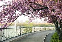 .flowering.trees.