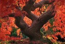 Fall Spectacular