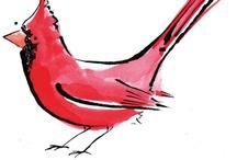 Cardinals / by Karin Davis