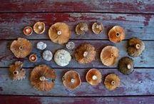 Mushrooms/Molds/Moss/Lichens / by Reanna Kaopuiki