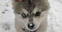 Puppy - Dog