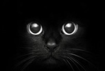 Cats...cats...cats...and more cats still... / Gotta love those cats / by Moon Stumpp