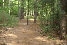 NC fun hikes- day trips / by Renee Gaunt