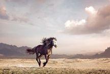 silverstone herd rp / lead mare:Flame lead stallion:Joker