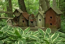 BIRDING...HOUSES, FEEDERS & the BIRDS