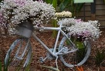 ❀...Bicycles / by Jen Luff