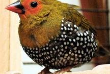miraculous birds / by Ellen Coffin