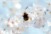 Bees and things to do with them / by Ellen Coffin