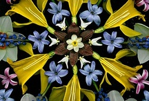 interesting plants and flowers / by Ellen Coffin