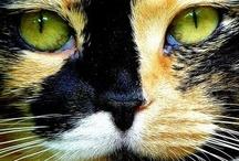 Fabulous cats / by Ellen Coffin