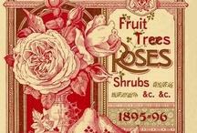 ❀...Vintage Adverts / Illustrations