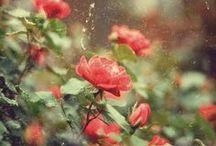 Flores, gracias. / by Sofipros