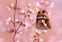❀...Butterfly Dreaming