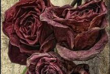 ❀...Sleeping Blooms / Dried and pressed flowers