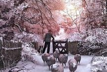 ❀...Pink Winters