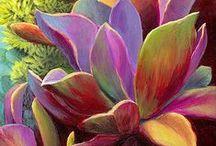 Garden plants, succulents