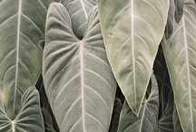 #FineFoliage / Beautiful examples of #FineFoliage and all things #leaves. Fine-Foliage.com  / by Christina Salwitz