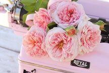 Pretty in Pink / by Dahna Blakley