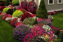 Backyard & Garden / by Dahna Blakley