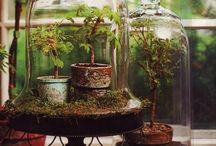 Cloche and terrarium
