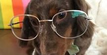 Animals with Glasses