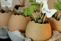 """Garden / """"To plant a garden is to believe in tomorrow."""" -Audrey Hepburn-"""