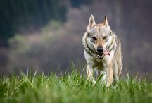 LOBOS / by Mikele