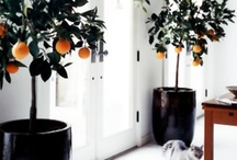Decor / by Analisa Plehn