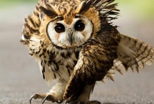 Owls & other feathered beauties