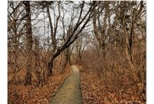 Haunted Getaway / fall trip / by Dawn Mitsionis