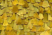 Nature | Patterns & Textures
