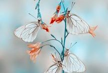 Nature  | Butterflies Wings