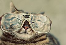 Cats / The best animals in the world