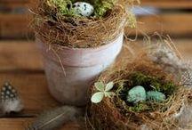 Signs of Spring & Easter / ~* Spring & Easter Inspiration*~
