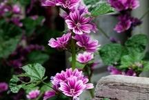 garden / by Julie Thomas