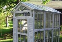 Greenhouse/Indoor Garden